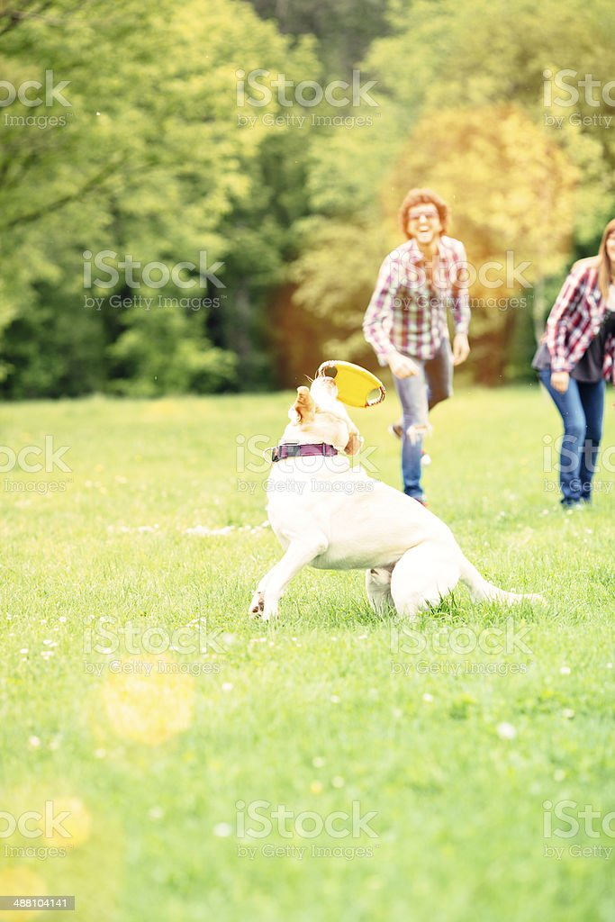 Cheerful Couple Playing With Their Dog Outdoors. royalty-free stock photo
