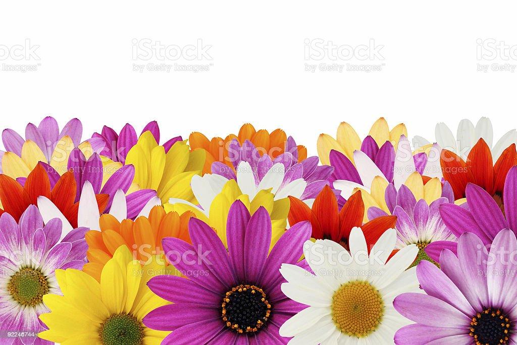 Cheerful daisy border stock photo