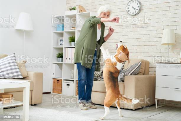 Cheerful ecstatic modern senior woman in casual clothing holding dogs picture id950847210?b=1&k=6&m=950847210&s=612x612&h=h9wilmgmjzed0 buyof1l otyu3z3xxxpndokqxhvn4=