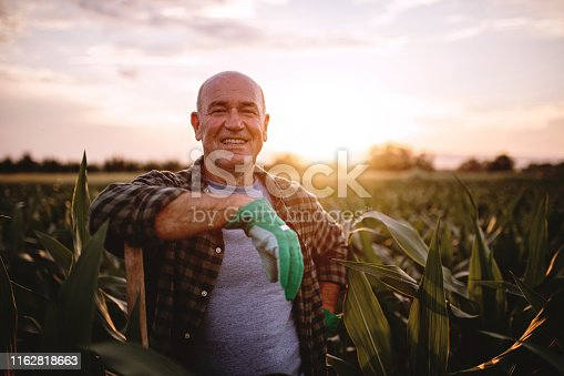 Working senior farmer working with a shovel on a agricultural farm in a rural area.