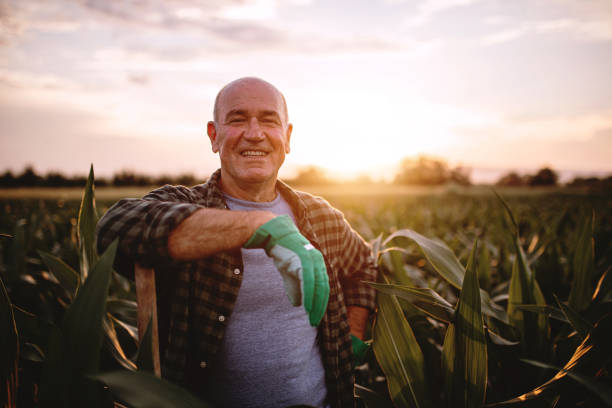 cheerful farmer in a corn field - farmer foto e immagini stock