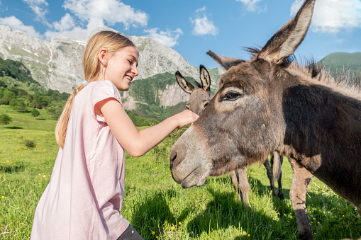 Cheerful Girl Feeding and Caressing Donkey on the Mountain Pasture