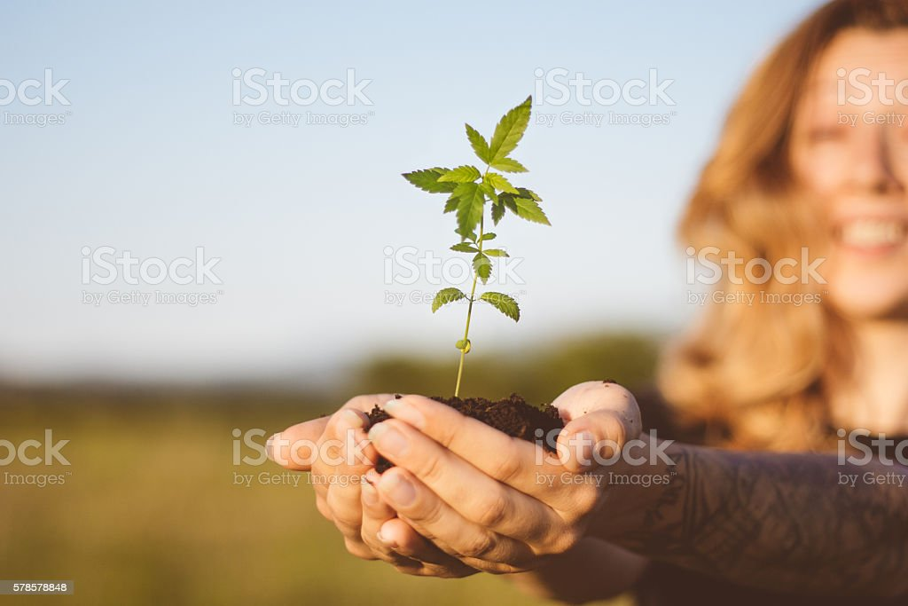 Cheerful girl showing cannabis seedling stock photo