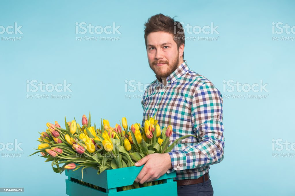 Cheerful handsome man florist holding box of tulips on blue background - Royalty-free Adult Stock Photo