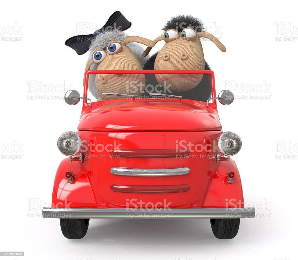cheerful lambs drive the car stock photo