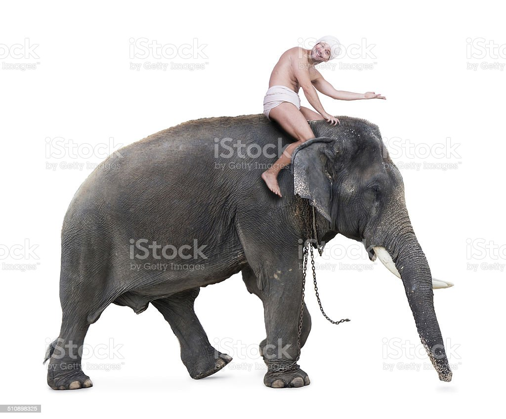 cheerful mahout rides on an elephant stock photo