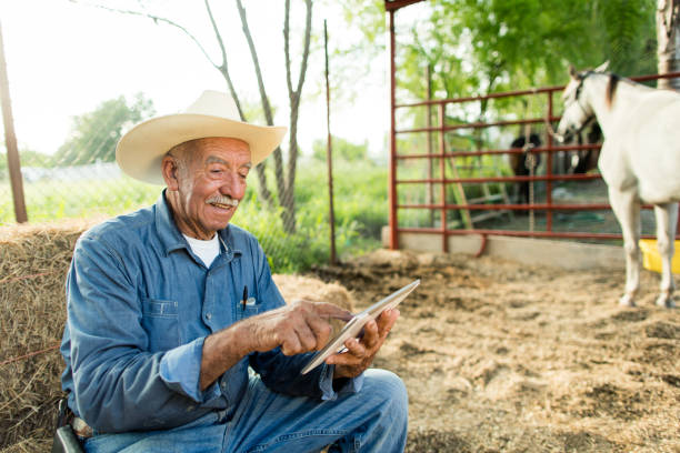 Cheerful senior mexican man sitting on haystack with digital tablet A cheerful senior mexican man sitting on haystack at a horse ranch, using a digital tablet and smiling. medium shot stock pictures, royalty-free photos & images