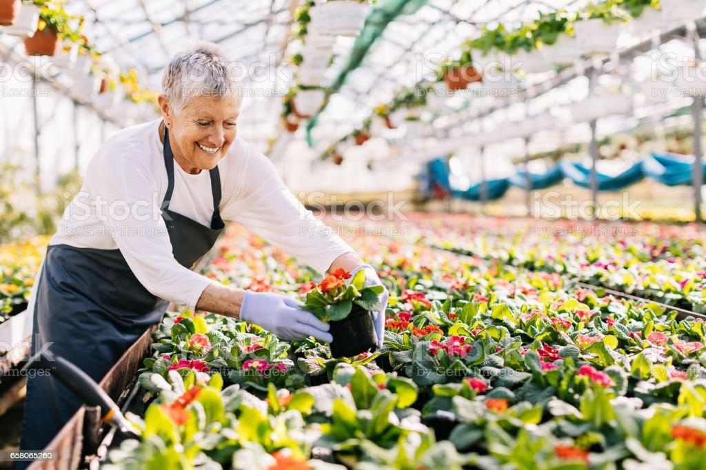 Cheerful senior woman planting flowers royalty-free stock photo