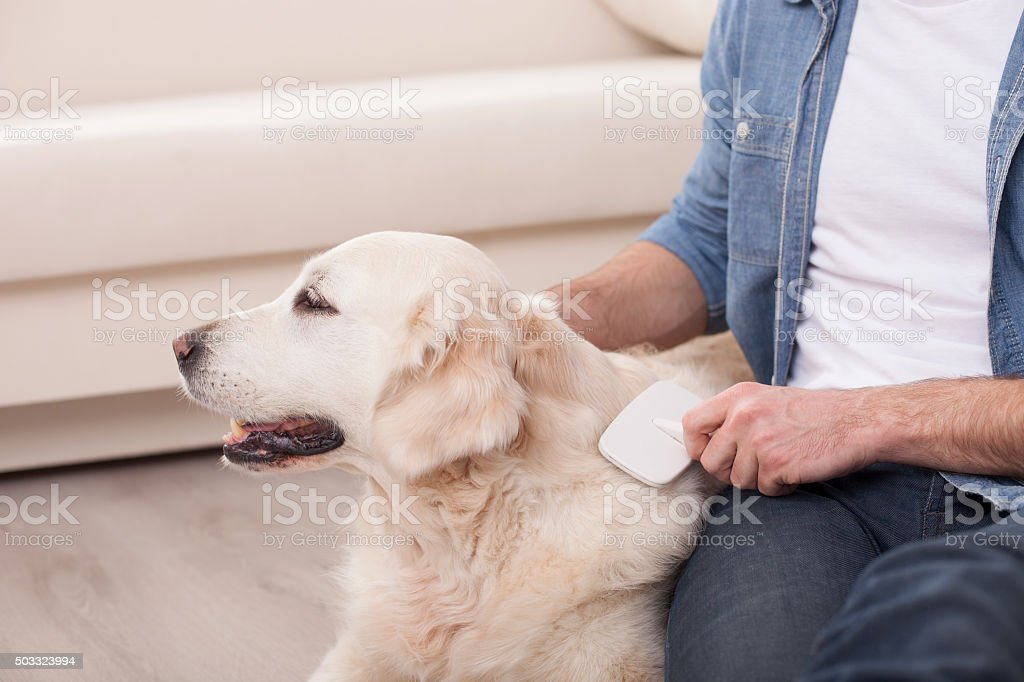 Cheerful young guy is caring of his pet stock photo