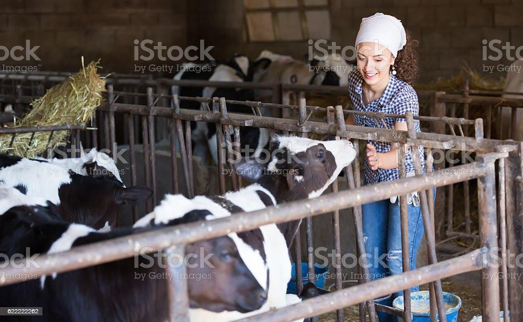 Cheerful young woman stroking cows on the farm - Photo