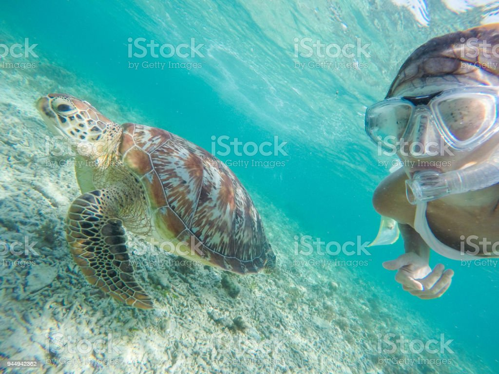 Cheerful girl takes a selfie underwater with beautiful sea turtle in...
