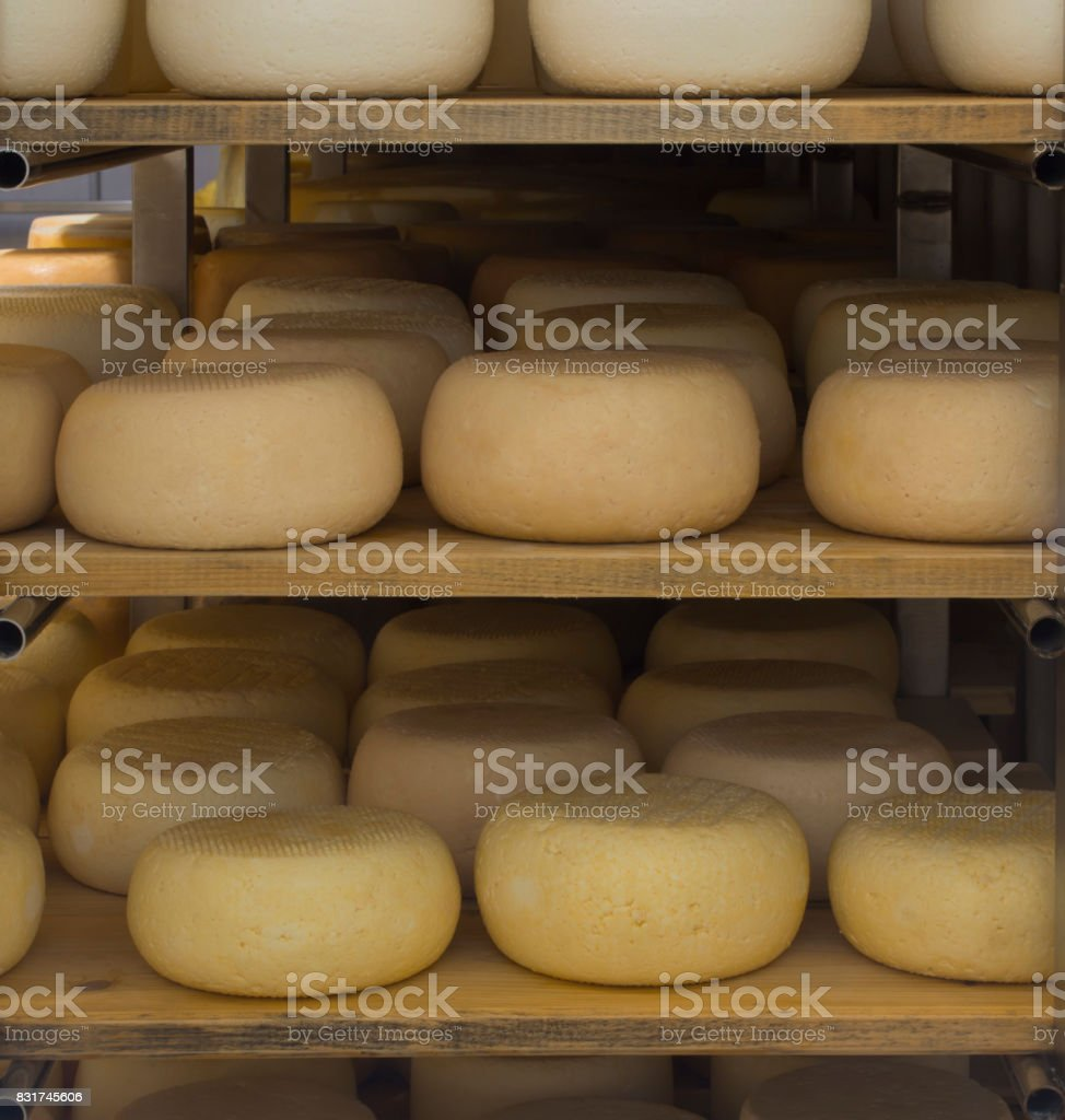 Cheese heads .Products in a storage room on a cheese farm .