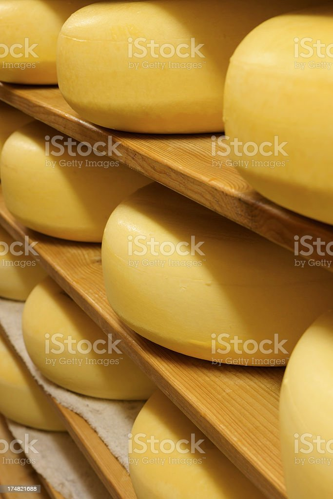 cheeses on the shelves at a dairy farm royalty-free stock photo