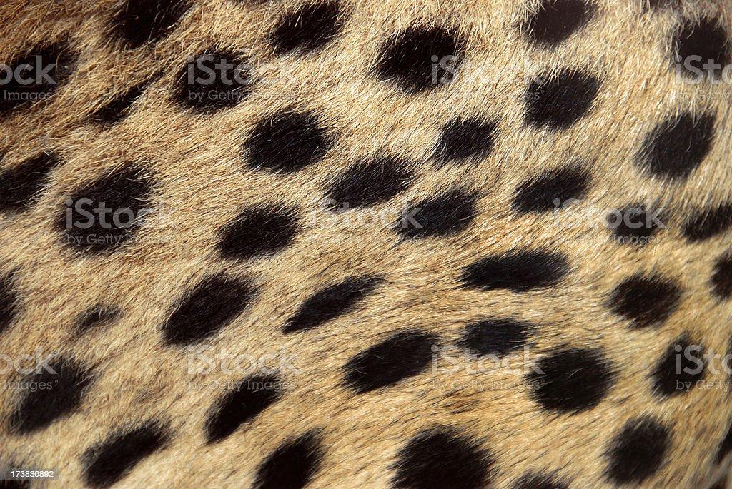 Manchas de piel de guepardo - foto de stock