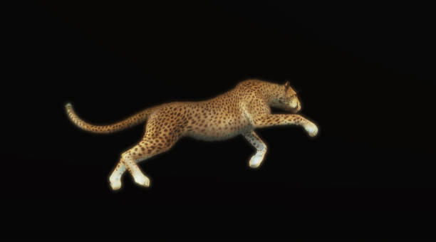 Cheetah running isolated on black background . This is a 3d render illustration . stock photo