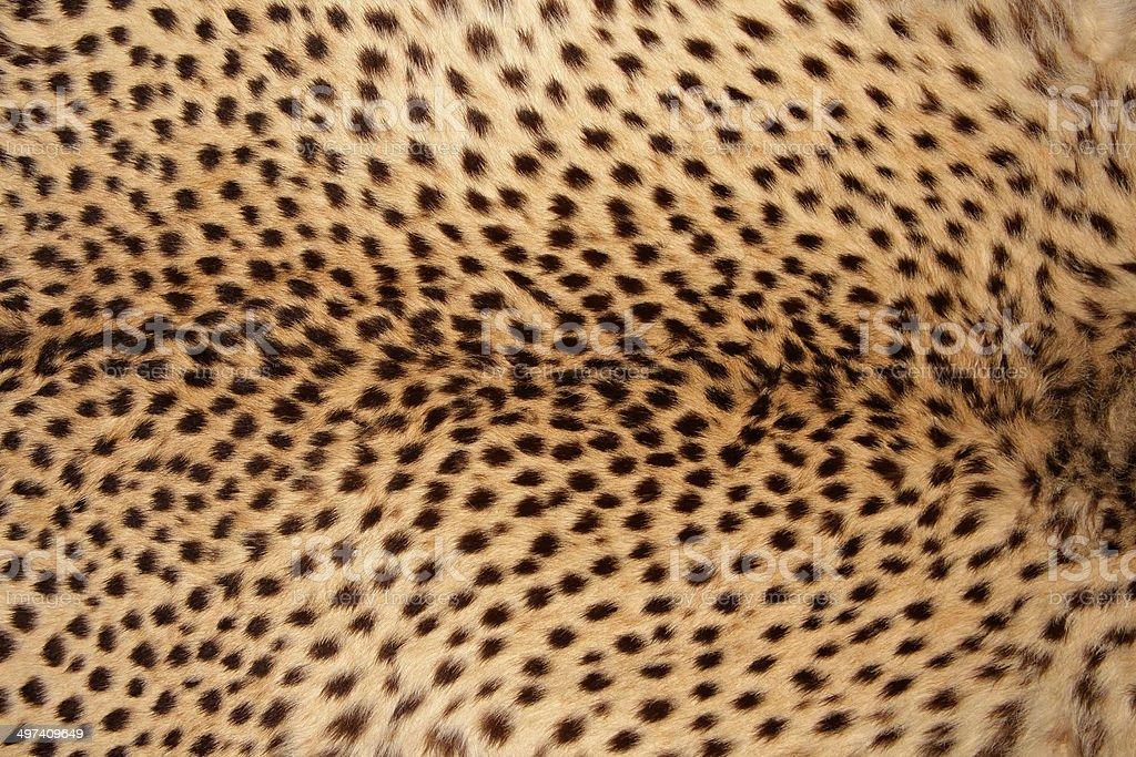 Piel de guepardo - foto de stock