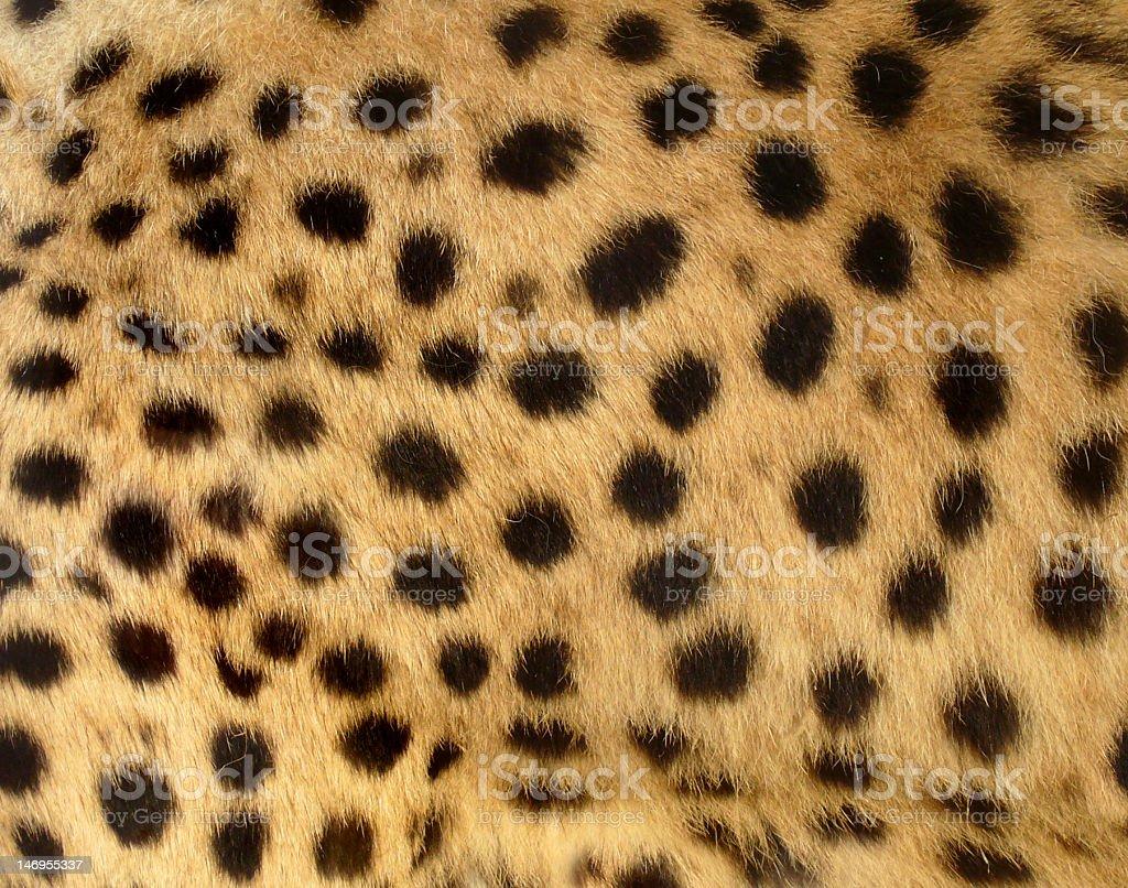 Manchas de guepardo - foto de stock