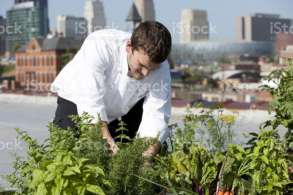 Chef Harvests Homegrown Herbs from Urban Restaurant Rooftop Healthy Eating stock photo