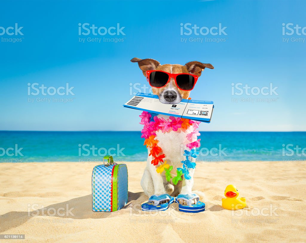 chek in boarding pass summer dog - Photo