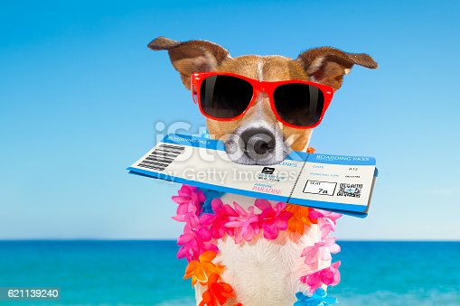 istock chek in boarding pass summer dog 621139240