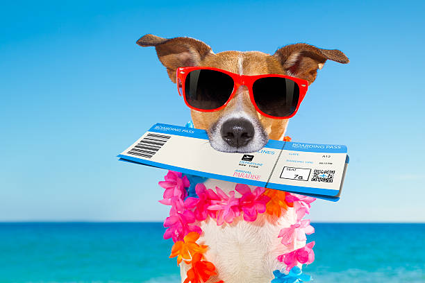 chek in boarding pass summer dog - valise humour photos et images de collection