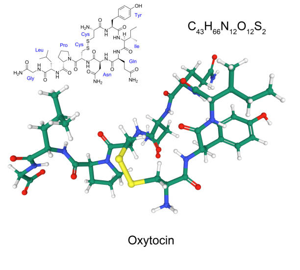 Chemical formula and structure of human hormone oxytocin stock photo