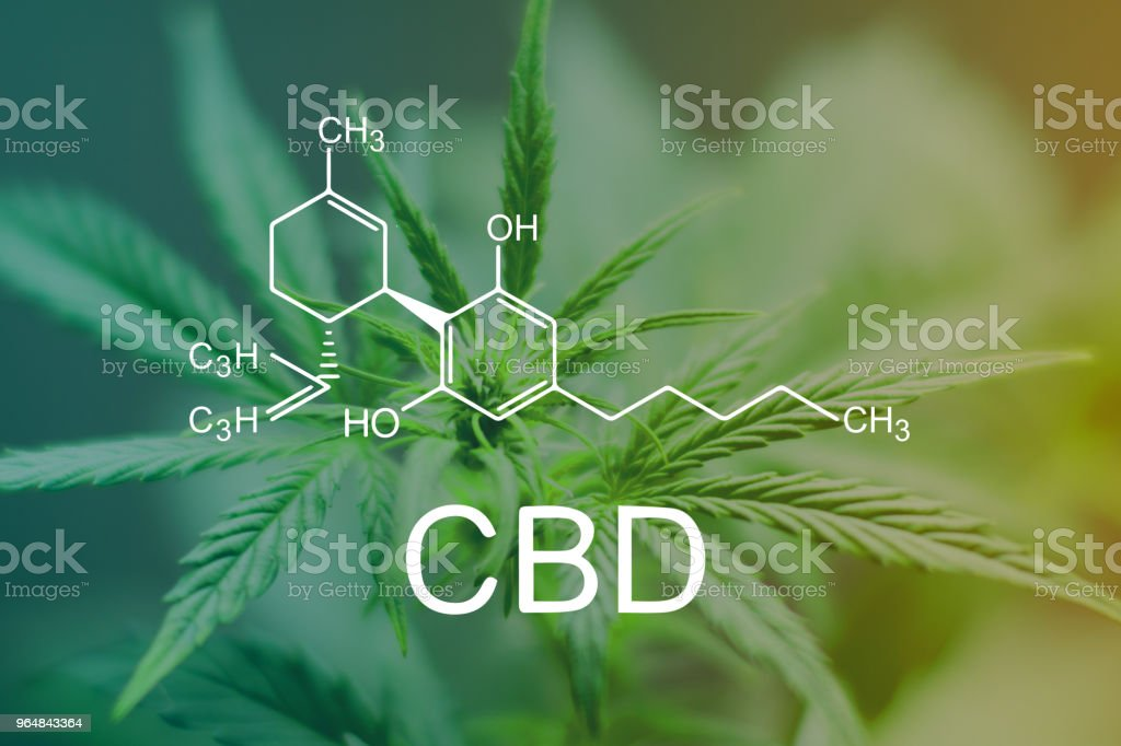 CBD Chemical Formula, Beautiful apex of a cannabis flower macro shot of a green neutral background royalty-free stock photo