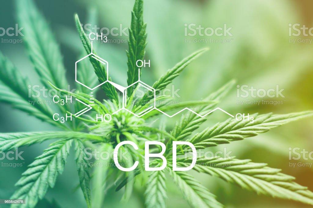 CBD chemische formule, Beautiful apex van een cannabis bloem macro-opname van een groene neutrale achtergrond - Royalty-free Blad Stockfoto