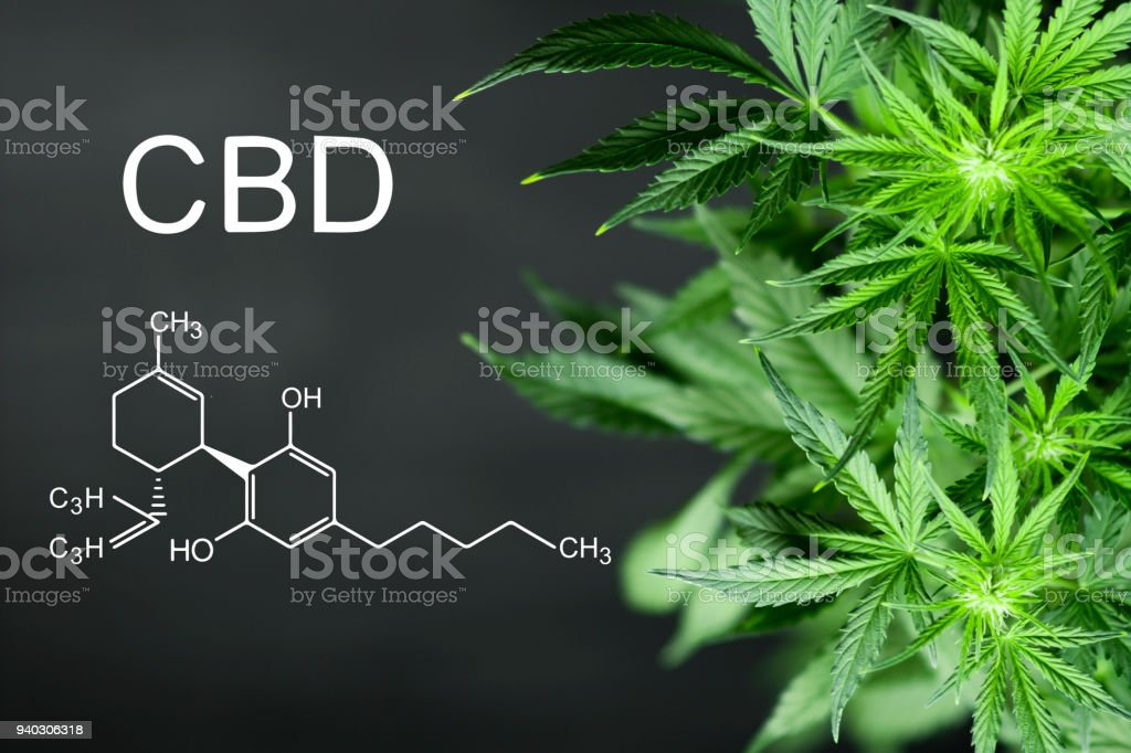 CBN chemical formula Beautiful background of green cannabis flowers A place for copy space stock photo