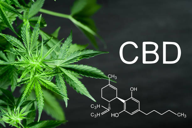 Cтоковое фото CBN chemical formula Beautiful background of green cannabis flowers A place for copy space