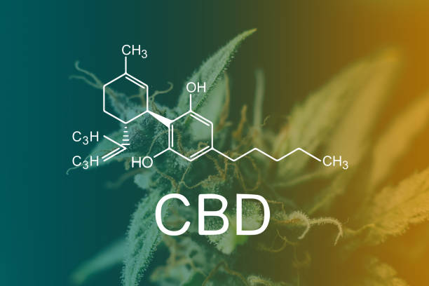 Cтоковое фото CBD Chemical Formula, Macro buds of marijuana cbd thc. Concepts of legalizing medicinal herbs weed, bud cannabis, Macro shot with sugar trichomes, buds grown cannabis in the house, Bud cannabis before harvest