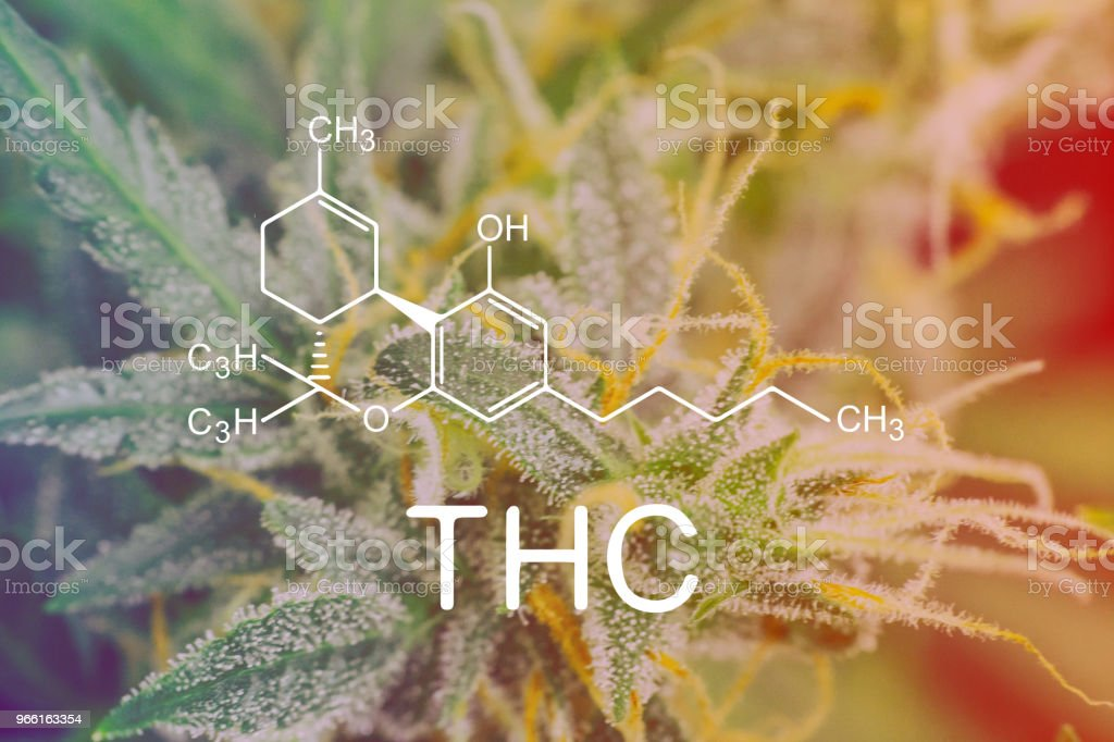THC Chemical Formula, Macro shot trichomes on buds weed cannabis with sugar trichomes. concepts of grow and use of marijuana cbd thc medicinal. Concepts of legalizing herbs grow indoor - Стоковые фото Без людей роялти-фри