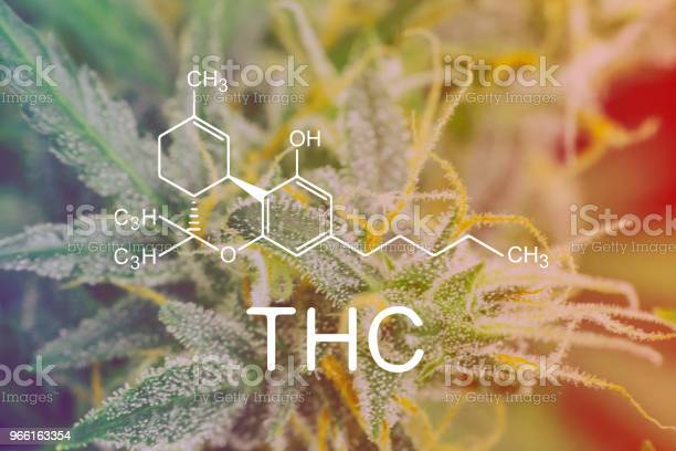 Thc Chemical Formula Macro Shot Trichomes On Buds Weed Cannabis With Sugar Trichomes Concepts Of Grow And Use Of Marijuana Cbd Thc Medicinal Concepts Of Legalizing Herbs Grow Indoor — стоковые фотографии и другие картинки Без людей