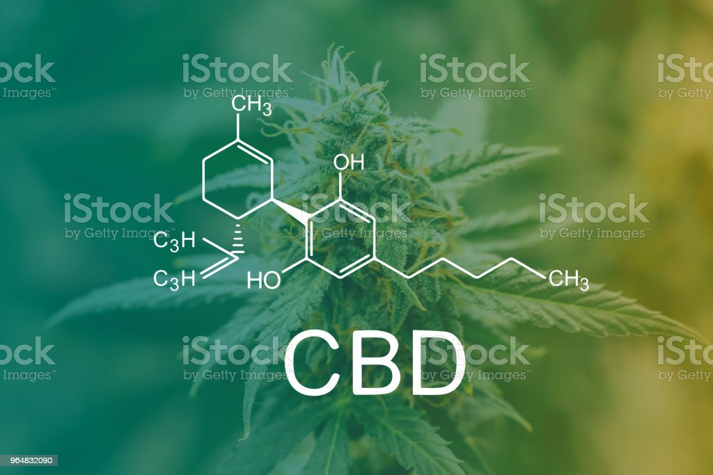 CBD Chemical Formula, marijuana cbd thc. Concepts of legalizing medicinal herbs weed, bud cannabis, Macro shot with sugar trichomes, buds grown cannabis in the house, Bud cannabis before harvest royalty-free stock photo