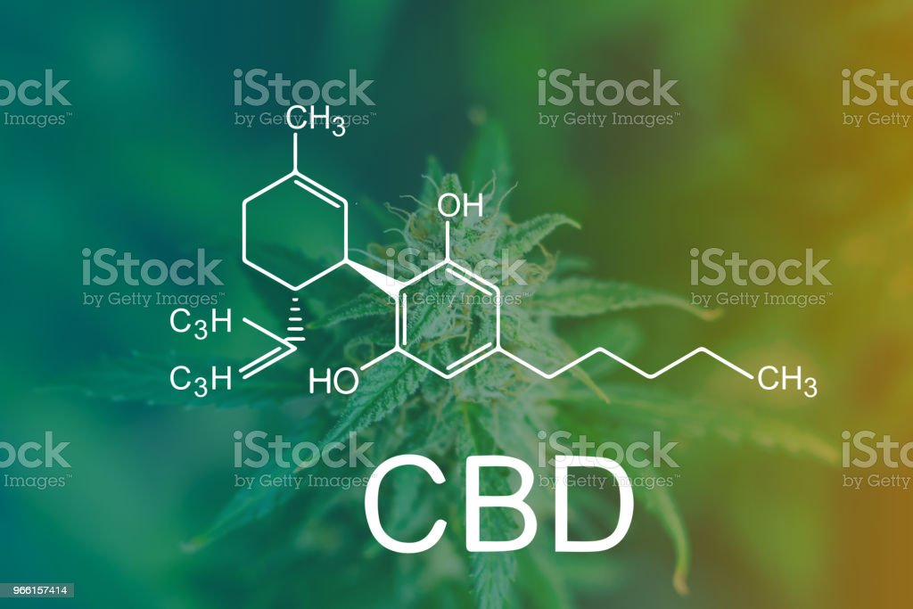 CBD Chemical Formula, shot with sugar trichomes cbd thc, concepts of grow and use of marijuana for medicinal purposes. Concepts legalizing weed Beautiful buds before harvest. cannabis grow indoor Macro stock photo