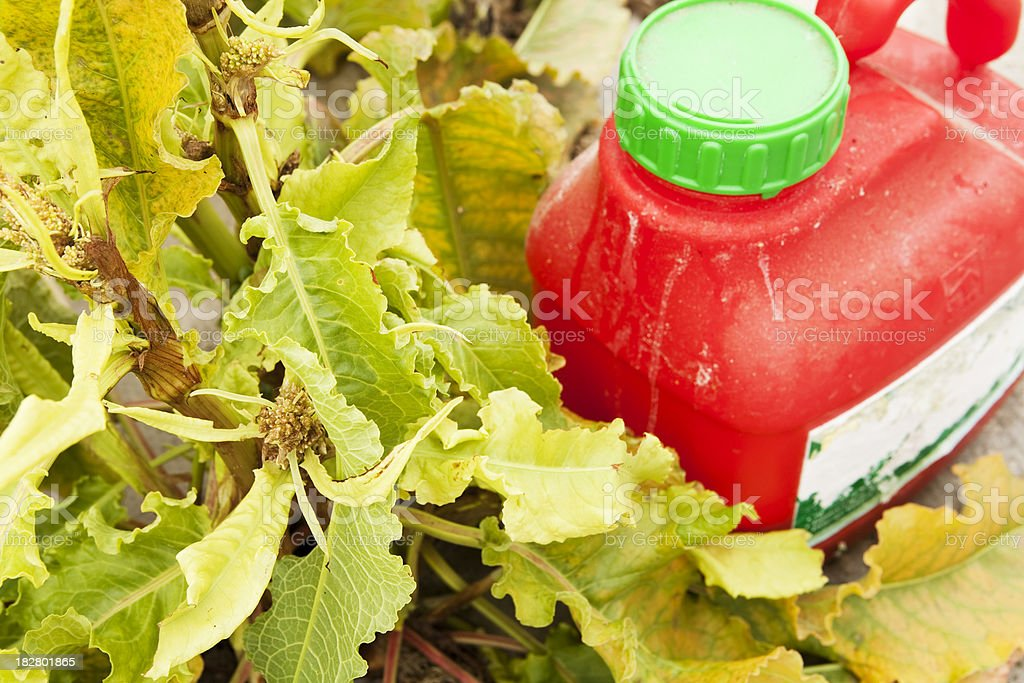 Chemical weedkiller with dead foliage stock photo