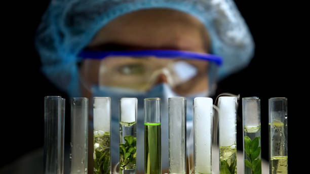 Chemist checking reaction in tubes with plants, alternative fuel development Chemist checking reaction in tubes with plants, alternative fuel development crop plant stock pictures, royalty-free photos & images