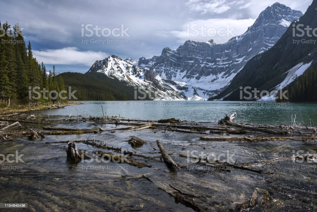 Scattered Driftwood and Scenic Landscape View of Chephren Lake and...