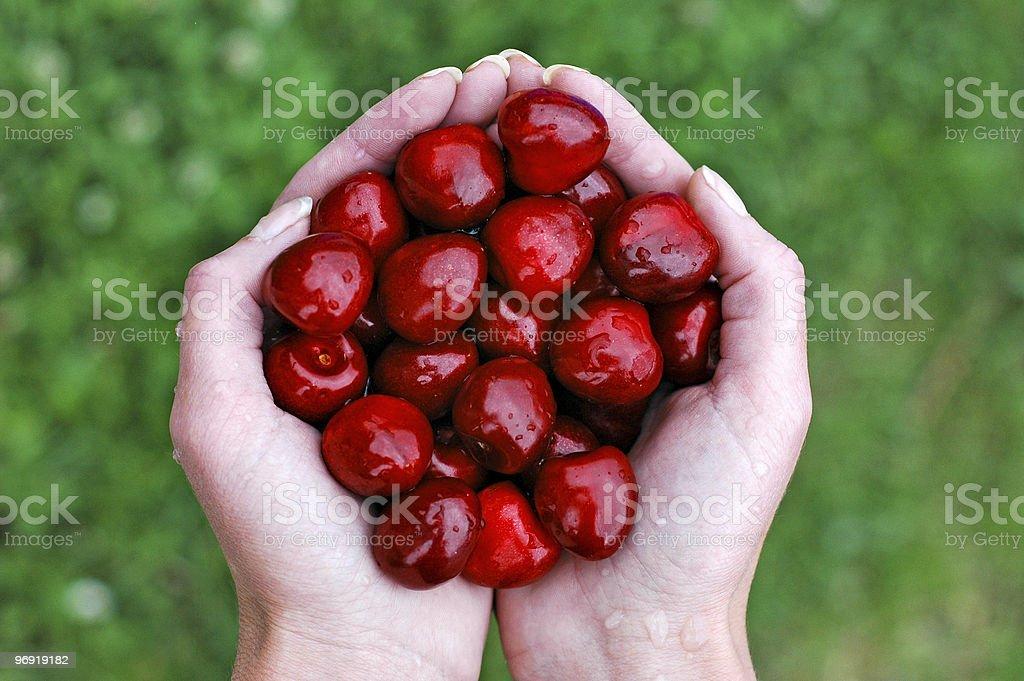 Cherries and hand 1 royalty-free stock photo