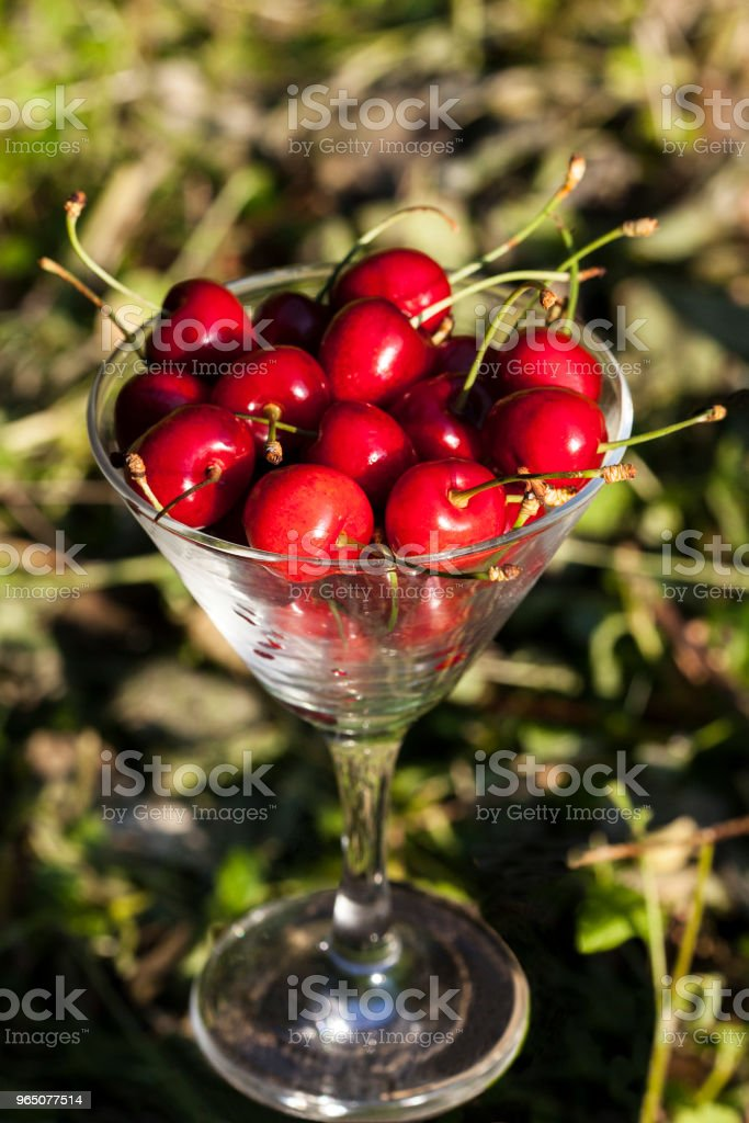 Cherries in Glass royalty-free stock photo
