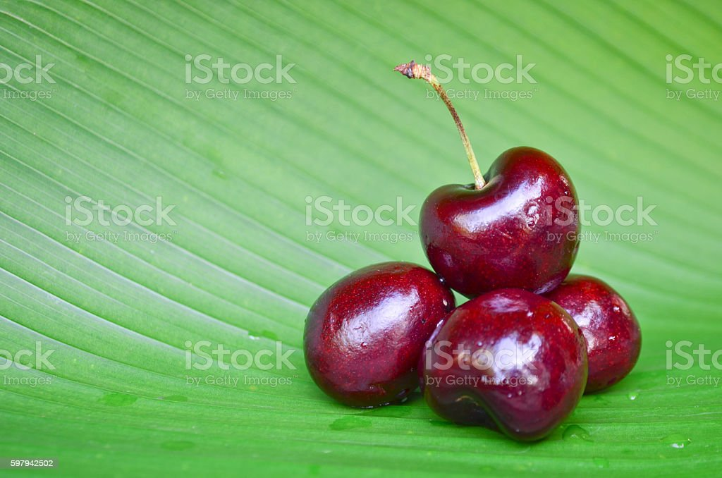 Cherries isolated on green leaf foto royalty-free