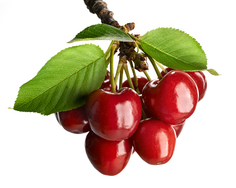 Cherries on a branch with white background