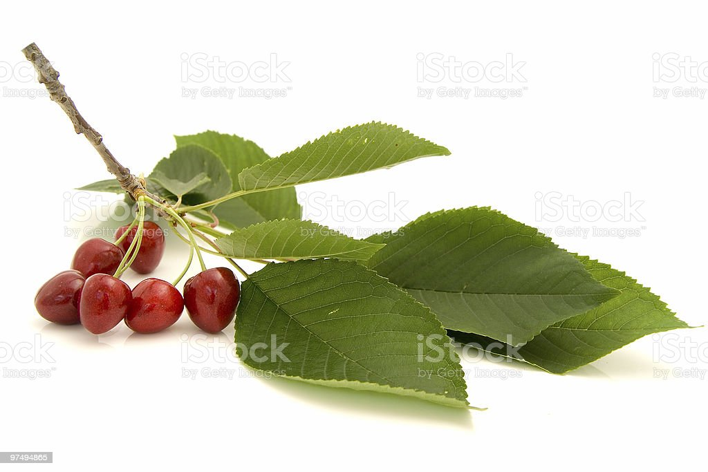 Cherries on the branch isolated over white background royalty-free stock photo
