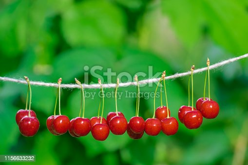 Cherries on the string in the garden on a sunny day