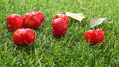 The cherries fell from the tree onto the lawn.
