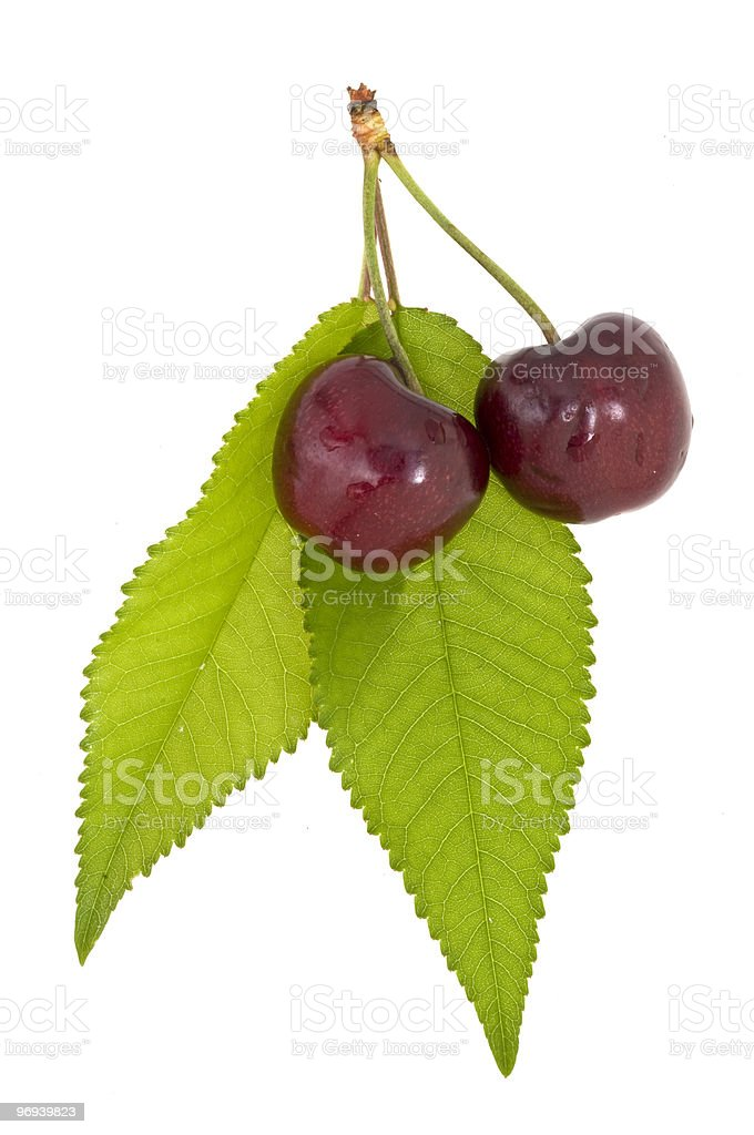 Cherries with leaves royalty-free stock photo