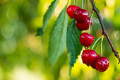 Cherry Background.