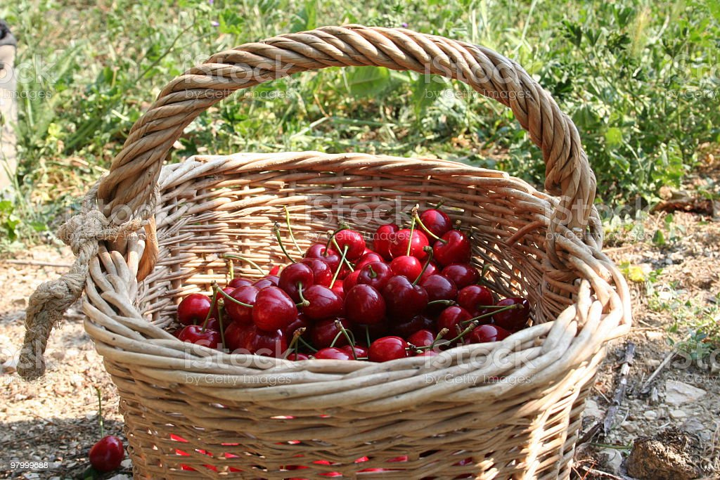 Cherry Basket royalty-free stock photo