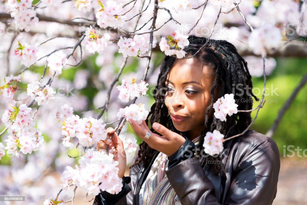 Cherry Blossom and Beautiful Girl. stock photo