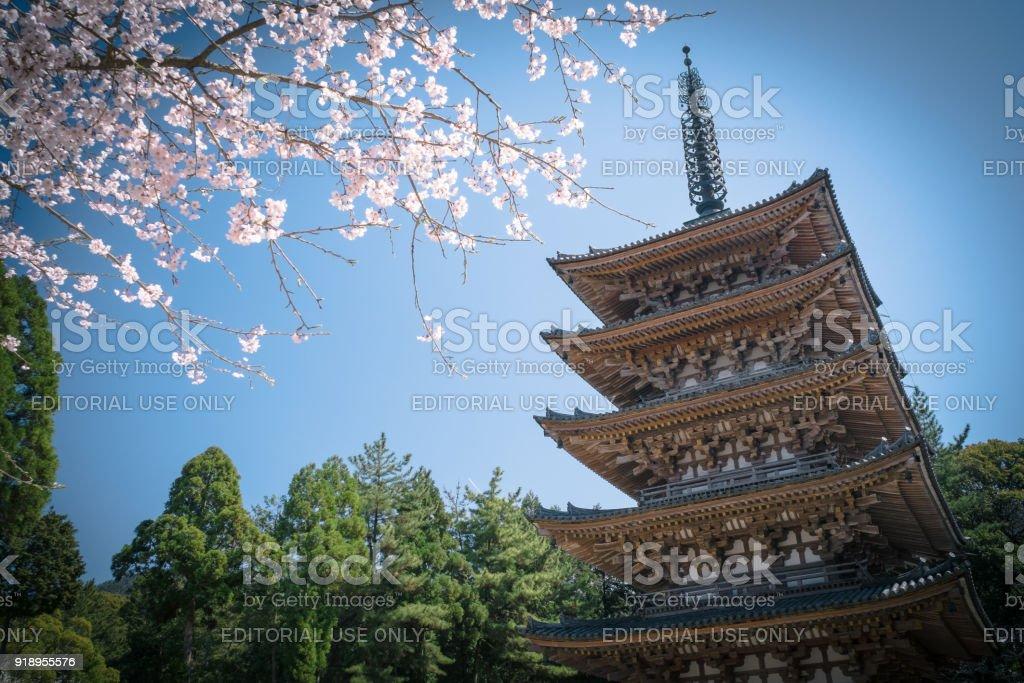 Cherry Blossom and Five Storied Pagoda of Daigoji Temple (Daigo-ji) during the Cherry Blossom season. stock photo